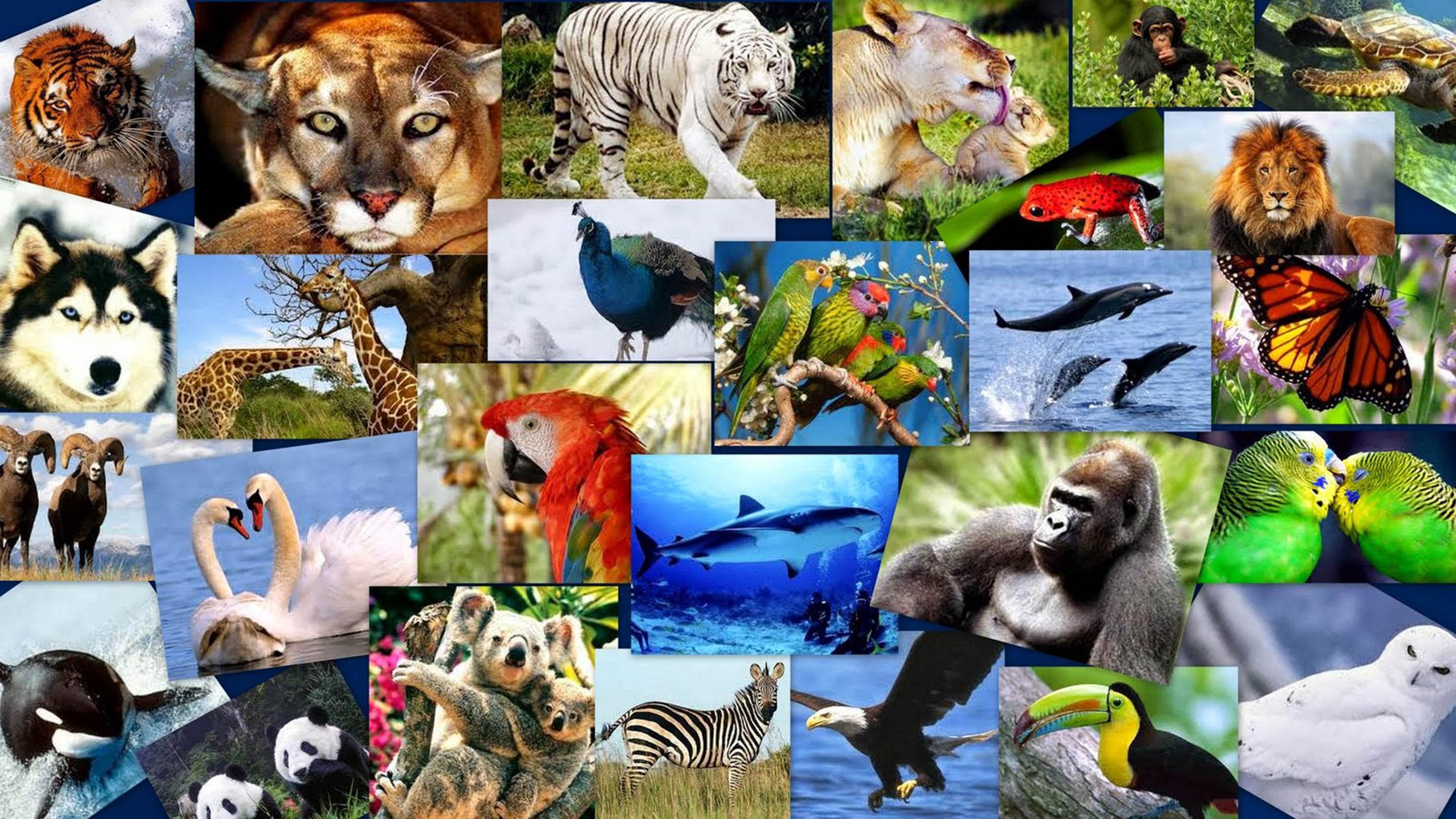 Un Millón De Especies En Peligro De Extinción Por 300